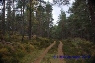 Walking in the woods near our house in Boat of Gatten