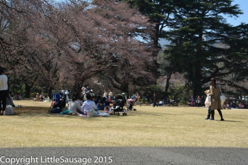 Picnics under the trees are almost mandatory at this time of year