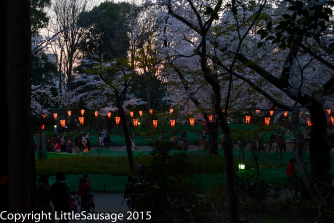 As the sun goes down, on come the lanterns.
