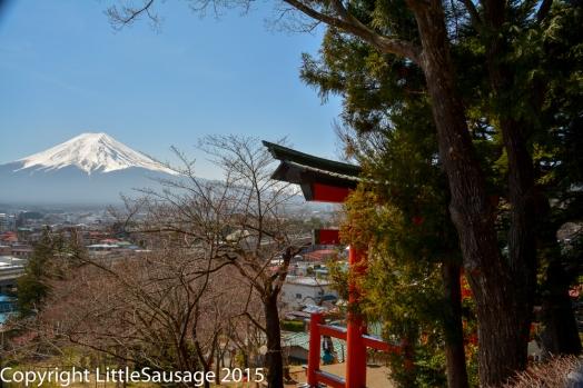 Fuji and tori gate