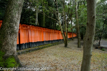 From the outside, the tunnel made by the gates winds through the woods like a mysterious red snake.