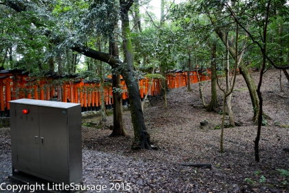 I liked this ominous metal box with its glowing red eye in the middle of the woods.