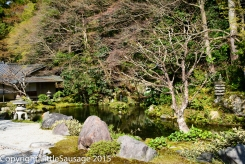 A pond with running water is a nice contrast to the formality of the zen gardens.