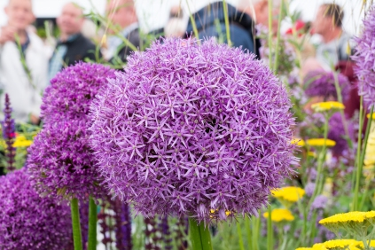 RHS Chatsworth 2017-06-09-14