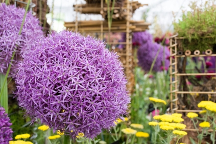 RHS Chatsworth 2017-06-09-15